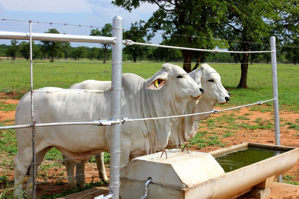 water trough in ranch, magnetic water treatment, water purification