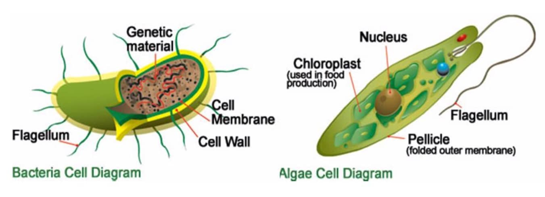 the targeted microorganism